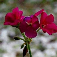 Цветы на подоконнике :: Светлана Петошина