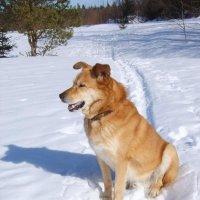 Зимняя прогулка в лесу. :: Андрей