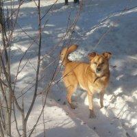 На зимней прогулки :: Андрей