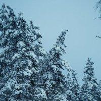 первый снег :: Алина Гриб