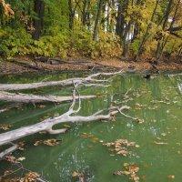 Оссений лес :: Антон