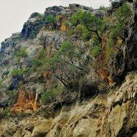 Живущие на скалах... :: Sergey Gordoff