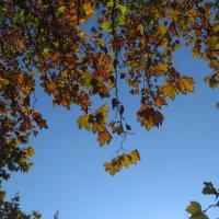 Осенний этюд :: Наталья (D.Nat@lia)