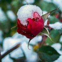 Первый снег... :: Виталий Павлов