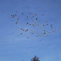 Чайки и голуби над городом :: Маргарита Батырева