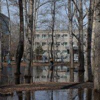 Весна в парке. :: Виктор Иванович