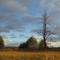 Сухое дерево и вид его унылый. :: Людмила Ларина