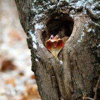 Ходят тут всякие, шумят, зимовать мешают..:) :: Андрей Заломленков