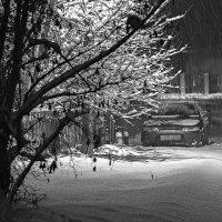 Зима пришла :: Вера Сафонова