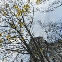 Серый ноябрь :: Анна Удалова