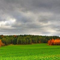 Красочная осень :: Waldemar F.