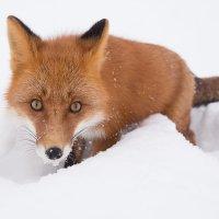 Смотри в глаза!!! :: Денис Будьков
