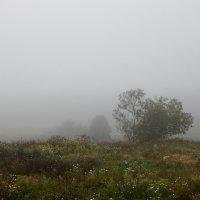 Туман. :: Елена Михайлова .
