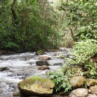 Приток Амазонки :: чудинова ольга