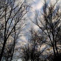 Деревья, небо :: Татьяна Королёва