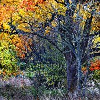 Огненная осень :: Aleksander Kaasik
