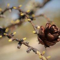 Весна. :: Лариса Красноперова
