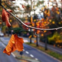 Осенний калейдоскоп :: Alexander Andronik