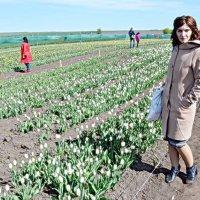 Тюльпанове поле :: Степан Карачко
