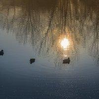 Утренняя медитация :: Лидия Цапко