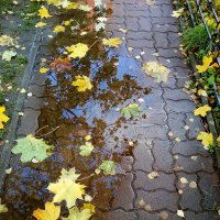 Осень - время мечтать и смотреть разноцветные сны.. :: Elena N