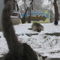 Иронический репортаж: Зима. Котам в Монако любовь - до ср..ки! :: Алекс Аро Аро