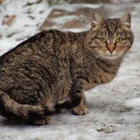 День домашних животных подходит к концу, но мы их любим каждый день. :: Татьяна Помогалова