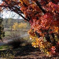 Осень на Мамаевом кургане :: Dr. Olver