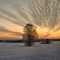 Первое утро зимы :: Николай Мальцев