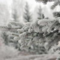 Зарисовки мороза. :: Алексей .