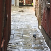 Одиночество в Венеции :: Юрий Матвеев