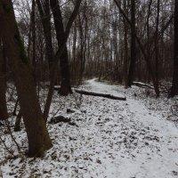 Первый день зимы 2017/18 :: Андрей Лукьянов