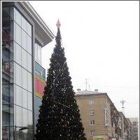 Уж ёлки в городе стоят, а снега нет и нет... :: muh5257