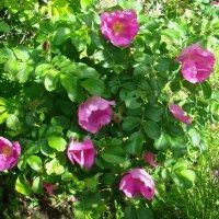 Нежные цветы :: Стас Борискин