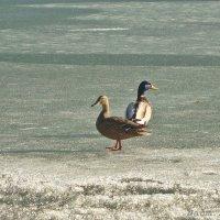 Спортивная пара на льду :: Лидия (naum.lidiya)