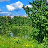 Короткое наше лето.. :: Светлана