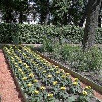 Огород в Летнем саду. :: Виктор Егорович