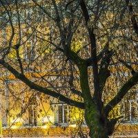 Золото Москвы :: Игорь Герман