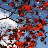 Красными огнями -небо полыхало... :: Slava Hamamoto