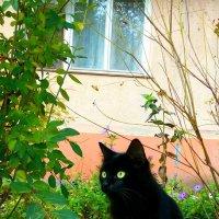 маленькая пантера))) :: Ekaterina S