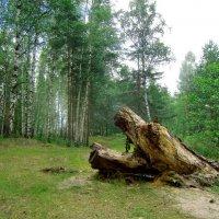Лесные троли. :: Нина