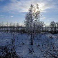 Природа декабря :: Вера Андреева