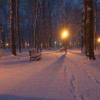 по первому снегу :: Владимир Зырянов