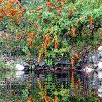 Подарок южной осени. Последние дня ноября в парке Монтедор. :: Ольга Голубева