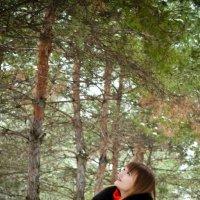 Сосновый лес :: Дарья Левина