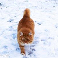 Рыжуля - тигруля :: Анна Окунева