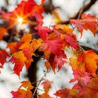 Осенние листья. :: Gene Brumer
