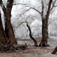 Сказочный лес :: Dr. Olver  ( ОлегЪ )