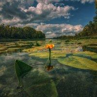 На реке. :: Андрей Лепилин
