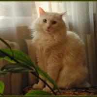 Котя :: Сергей Лякишев